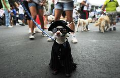 This dog wearing a cape | The 50 Best Animal Photos Of 2012