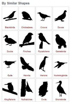 Bird beaks Investigate how different types of beaks are