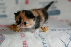 The cuteness of this tiny kitten is indescribable.