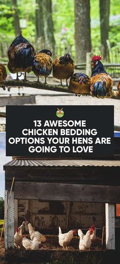Awesome Chicken Bedding Options Your Hens Are Going To Love Pflege Huhnerstall Selbermachen