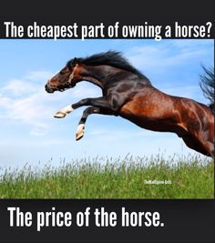 The cheapest part of owning a horse