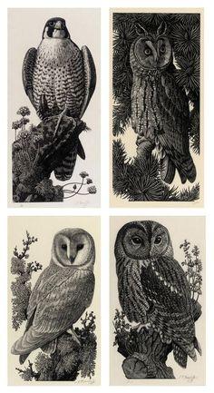 49 New ideas illustration art cientific Bird Artists, Nature Artists, Bird Drawings, Animal Drawings, Horse Drawings, Polka Dot Art, Love Illustration, Owl Art, Wood Engraving