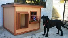 Chip - California:  several years of being tried and tested, this dog house has been proven to be the most comfortable and the safest home you can build for your beloved dog.
