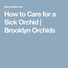 How to Care for a Sick Orchid   Brooklyn Orchids