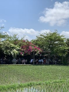 Lunch at Nook means we sit at the edge of a working rice field. Often there are Balinese working in the sawah (rice field), but this day, all was quiet. Oh, and lunch was good too