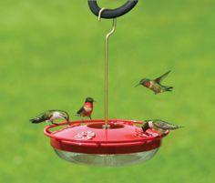 Aspects HummZinger HighView 12 oz Hanging Hummingbird Feeder Aspects http://www.amazon.com/dp/B003XL7WZO/ref=cm_sw_r_pi_dp_.DzMtb0BCQEJAB13