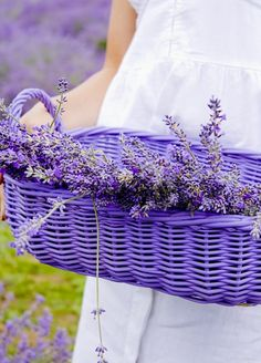 Rectangular Purple Basket is perfect for Lavender! Lavender Cottage, Lavender Green, Lavender Fields, Lavender Flowers, Purple Flowers, Purple Love, Purple Lilac, All Things Purple, Purple Rain