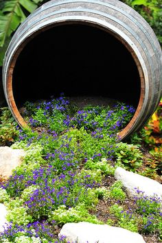 This reminded me to move some ajuga into Bug Village!