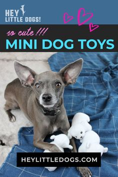 Cute mini toys that are the perfect size for small dogs. Choose from different animals & designs in coordinating sets, puzzle toys, and single minis. They are the perfect size for little dog mouths and paws. Your dog will love tossing these little things around. Dogs of all sizes love these toys, but they are a favorite of little dogs like chihuahuas, yorkies, french bulldogs, bichon, & other small breed dogs. #dogtoys #smalldogtoys #littledogtoys #minidogtoys #dogstuff #dogsupplies… Small Dog Toys, Small Dogs, Small Dog Breeds, Small Breed, Chihuahuas, Yorkies, Animal Design, Dog Design, Stimulating Dog Toys