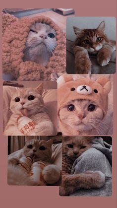 Fondo de pantalla de gatitos-