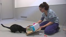 Winnipeg Humane Society cat enrichment program