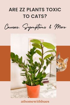 Are zz plants safe for cats? This guide covers all you need to know as well as what to do if your cat is poisoned by a ZZ plant. Houseplants Safe For Cats, Toxic Plants For Cats, Zz Plant Care, Easy Care Indoor Plants, Plant Decor, Ideas, Thoughts, Botanical Decor