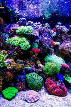 Reef aquariumYou are in the right place about Fishes bowl Here we offer you the most beautiful pictures about the baked Fishes you are looking for. When you examine the Reef aquarium part of the picture you can get the massage we want to deliver. Saltwater Aquarium Setup, Coral Reef Aquarium, Betta Aquarium, Saltwater Fish Tanks, Nature Aquarium, Aquarium Design, Marine Aquarium, Coral Reefs, Aquarium Aquascape