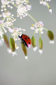 Ladybugs have always been my good luck charm & now that your gone I see them everyday :) <3
