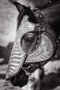 gorgeous head armor on a horse, barding