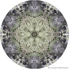 Mandala No. 229 from http://shop.rockytopstudio.com