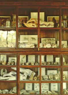 Natural history/curio cabinet for my library | Source: Dioramas and Clever Things