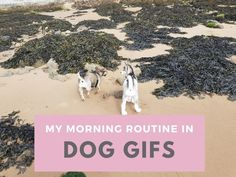 My Morning Routine In Dog Gifs