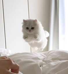 Love Cute Animals shares pics of playful animals, cute baby animals, dogs that stay cute, cute cats and kittens and funny animal images. Baby Animals, Funny Animals, Cute Animals, Cute Kittens, Cats And Kittens, Kittens Meowing, Persian Kittens, Crazy Cat Lady, Crazy Cats