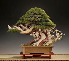 """Great Bonsai trees - Goshin (""""protector of the spirit"""") is a bonsai created by John Y. Naka. Description from pinterest.com. I searched for this on bing.com/images"""