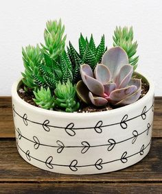 Loving this Heart Vine Potted Succulent on #zulily! #zulilyfinds