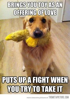 funny pet pictures - Google Search