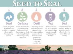 Young Living is proud to set the standard for essential oil purity and authenticity by carefully monitoring the production of our oils through our unique Seed to Seal® process. From the time the seed is sourced until the oil is sealed in the bottle, we apply the most rigorous quality controls possible to ensure that you are receiving essential oils exactly the way nature intended.  Our exclusive Seed to Seal process includes five painstaking steps:
