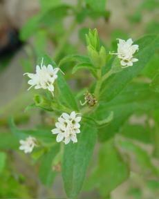 Article: 'Facebook is stevia' by Nerdette Tanya Tarr