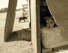 More photos at lostdogsfilm.org