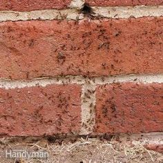 Wait! Don't step on that ant! Stomping on every ant you see in your kitchen won't solve your insect problem. And that ant scurrying across your floor might be the key to wiping out an entire ant colony. Check out these 10 expert tips for ridding your house of ants and other insects.