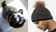Meet The Animal Who Dies For These Stupid Hats (article) Please stop contributing to their torture and murder. Go VEGAN