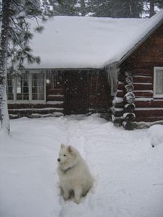 Cabin With Snow, Lake Tahoe And My Samoyed