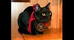Gato ganha 'escritório' em museu no Japão