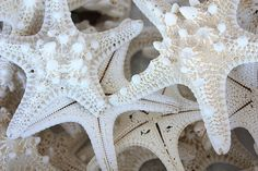 """""""White Starfish"""" by Carol Groenen This closeup of of knobby starfish is perfect for decorating with a beach theme. #starfish #whitestarfish #beachdecor http://carol-groenen.artistwebsites.com"""
