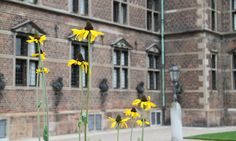 The rose is not the only flower at Rosenborg. Here are some beautiful rudbeckia flowers. Copyright: Rosenborg Castle / Rosenborg Slot