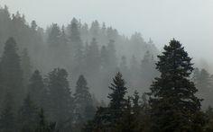 forest tumblr - Поиск в Google