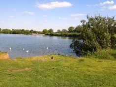 Watermead Park rat, Leicester, England, 16/09/15