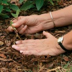 Six Tips for Effective Weed Control - Fine Gardening Article. Some great guidance on reducing weeds in your garden! Garden Weeds, Lawn And Garden, Garden Plants, Fine Gardening, Organic Gardening, Gardening Tips, Pruning Hydrangeas, Organic Weed Control, Garden Maintenance