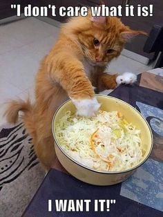 This is one of my salad ways. I prepared this coleslaw with my bare hands ... paws. Let me taste. It has my 3 secret ingredients: diced mango, a smidgen of condensed milk & dirty paws for flavor, baby!