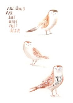 The owls are not what they seem by Lucy Eldridge.