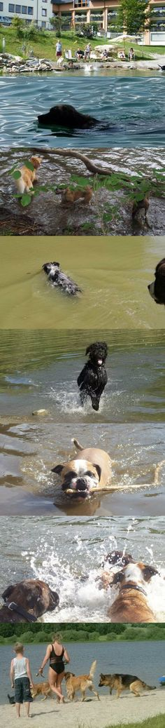 Hunde baden im Hotel Bergfried oder in freier Natur um Rötz im Naturpark Oberer Bayerischer Wald