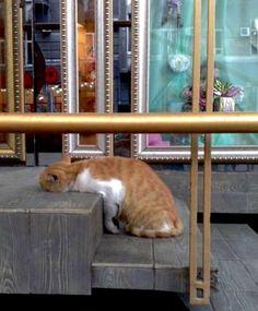 ♥Weird place for a catnap !