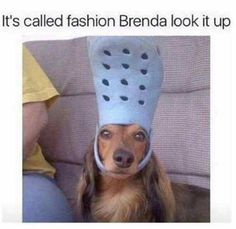 27 Funny Animal Memes To Tickle Your Funny bone #funny #picture