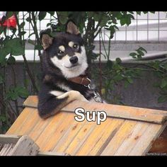 thats all i gotta say  #dogmeme  www.anilols.co.uk for more funny animals #cats