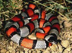 Fotos de animales exoticos