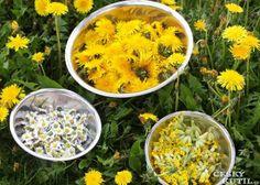 Pampeliškový sirup K 1 kg cukru potřebujete:  400květů pampelišky 100květů sedmikrásky 50květů petrklíčů –prvosenky jarní 20 vrchních částí rostliny hluchavky nebo její listy a květy 1-2 pomeranče Květy pampelišek i ostatních do hrnce, hluchavky- jen listy a květy. Citron a pomeranč  na dílky a na půlky Směs zalijeme 2 – 2,5 l vody, cukr rozpustit a směs míchat. Druhý den scedíme směs přes plátýnko a svaříme 1 – 1,5 hod., podle toho, jak houstne, do sklenic, zavíčkujeme a uložíme do chladu. Herbalism, Curry, Spices, Food And Drink, Smoothie, Remedies, Health Fitness, Herbs, Homemade