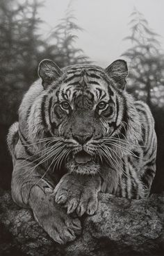 Crouching tiger - Pencil / by Julie Rhodes