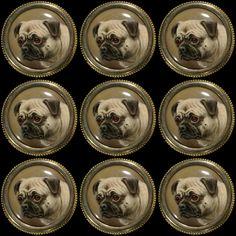 Our latest #PugPost is barking humans. #PugPower #PugLife #VotePug #puglove