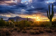A Sonoran Desert Sunrise Art Print by Saija Lehtonen. All prints are professionally printed, packaged, and shipped within 3 - 4 business days. Choose from multiple sizes and hundreds of frame and mat options. Canvas Art, Canvas Prints, Art Prints, Arizona Sunrise, Cactus, Desert Art, Desert Sunset, Desert Rose, Thing 1