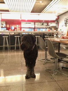 going out for dinner Black Russian Terrier, Going Out, Dinner, Dining, Food Dinners, Dinners